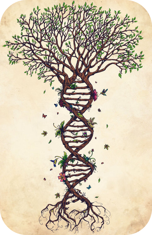Drawing of a tree whose roots are twisted into a DNA double-helix.