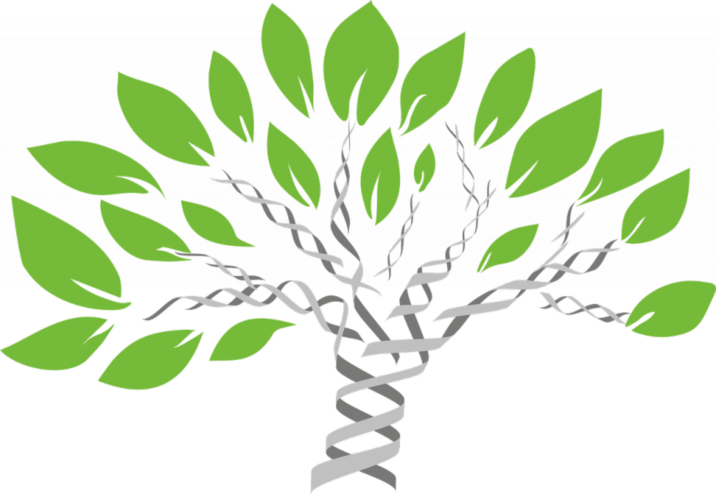Tree with trunk and branches drawn like DNA double helix